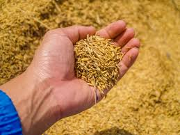 agricolture contadine