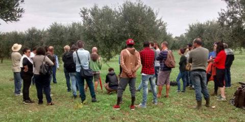 Lavoratori agricoli rete fuori mercato