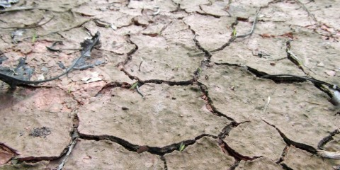 terra siccità